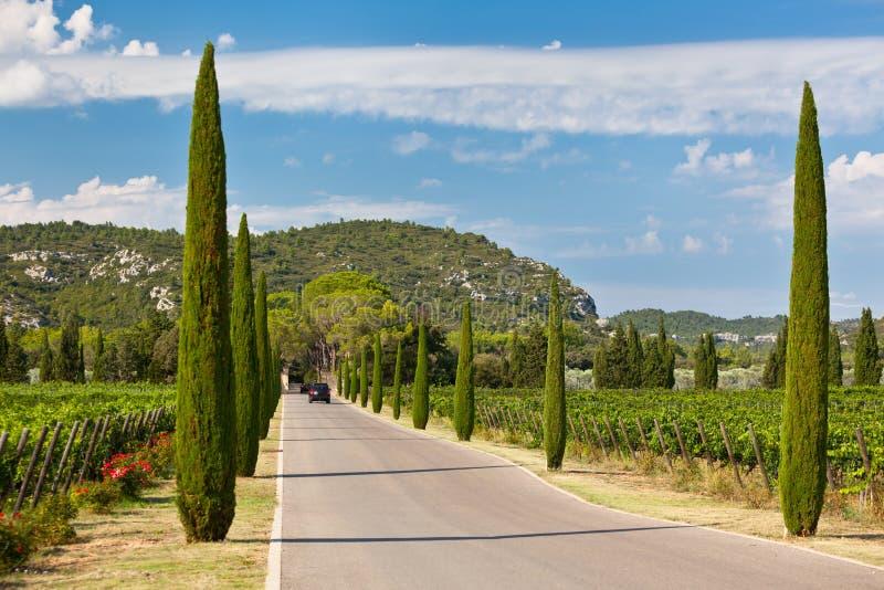Cypressgränd till och med vingårdar royaltyfria bilder