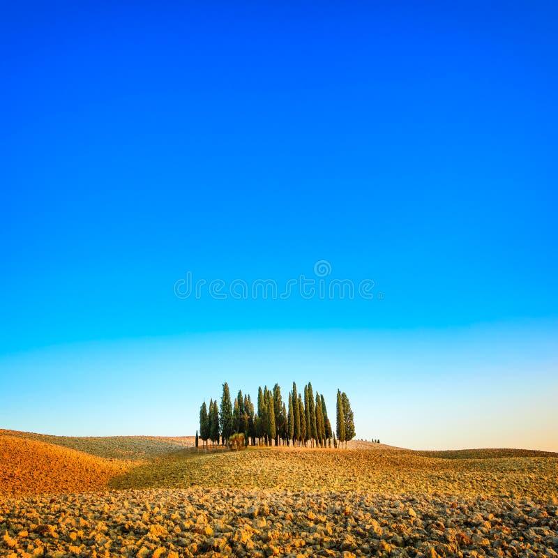 Cypressgrupp och lantligt landskap för fält i Orcia, San Quirico, Tuscany. Italien arkivbilder