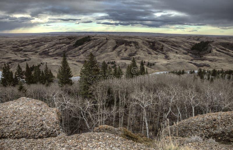 Cypresskullar Alberta Saskatchewan royaltyfri foto