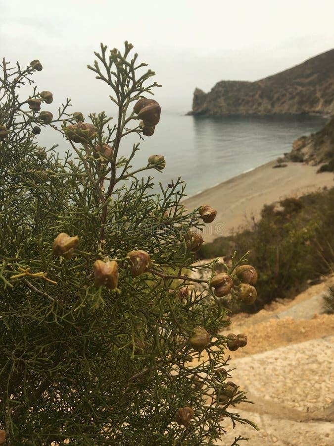 Cypresskulleväg till havet arkivbilder