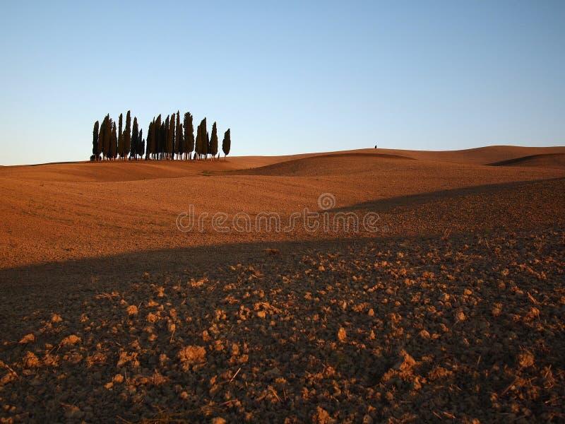 cypressliggandetrees tuscany arkivbilder