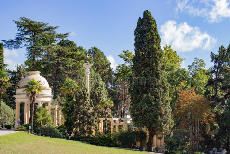 Cypressträd i sommaren i parkerar fotografering för bildbyråer