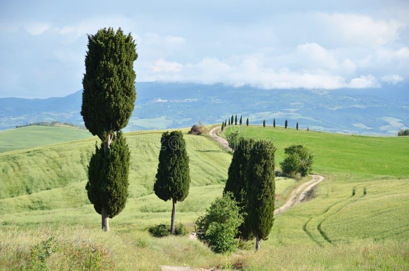 Cypressträd längs den lantliga vägen royaltyfri fotografi