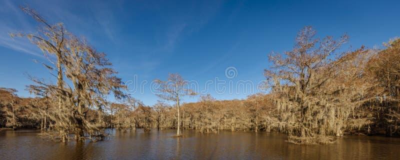 Cypressträd på Caddo sjödelstatsparken, östliga Texas nära Louisiana Inget spanjor royaltyfri fotografi