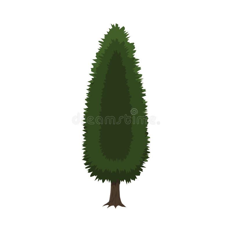 Cypressträd som isoleras på vit royaltyfri illustrationer