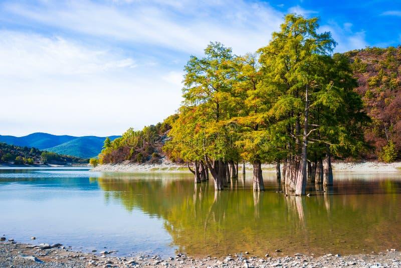 Cypressträd växer i sjövattnet på en höstdag arkivfoto