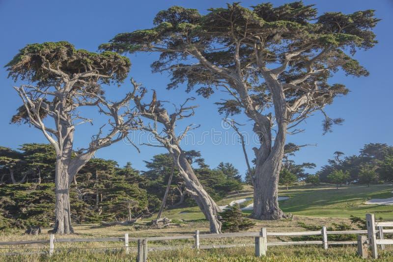 CypressTrees ao longo da movimentação de 17 milhas perto de Fanshell negligencia Califórnia imagens de stock royalty free