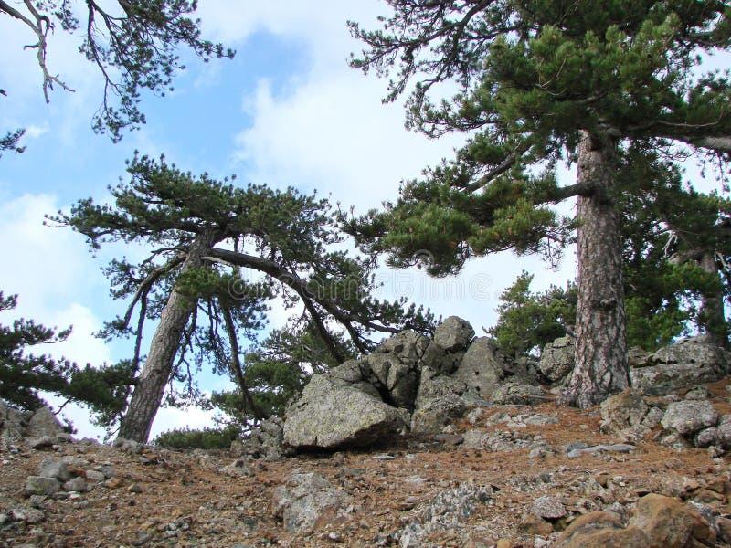 cyprus Montagnes de Troodos Panorama des for?ts sauvages de montagne ? une altitude de 1900 m?tres au-dessus de niveau de la mer image libre de droits