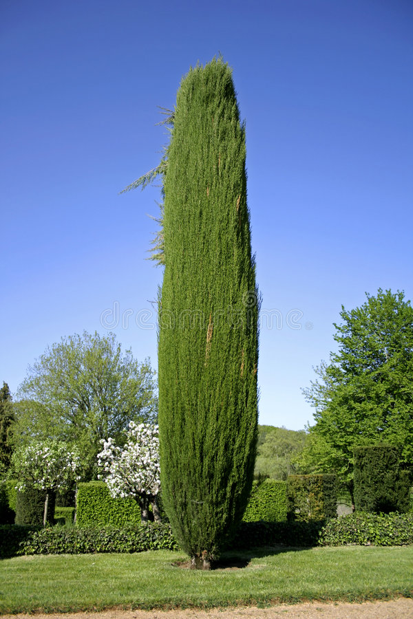 Cyprus tree in the gardens stock image. Image of circle - 2581375