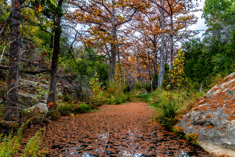 Cypress Trees on Hamilton Creek. Colorful Giant Cyprus Trees with Beautiful Fall Foliage on Tranquil Hamilton Creek Covered with Cypress Leaves near Hamilton stock photos