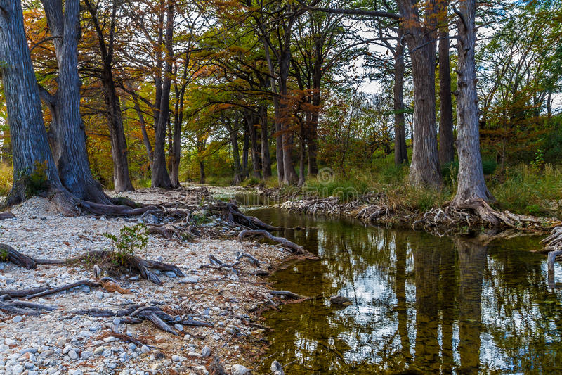 Cypress Trees on Texas Hill Country Creek. Colorful Cypress Trees with Beautiful Fall Foliage on a Rocky, Tranquil, Texas Hill Country Creek royalty free stock photo