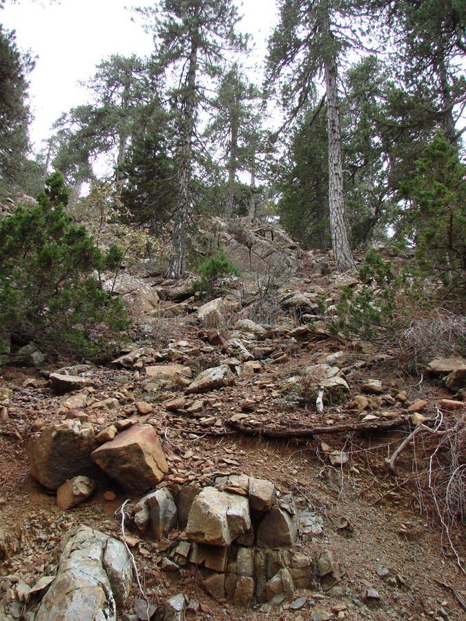 cyprus Troodos berg E royaltyfri foto