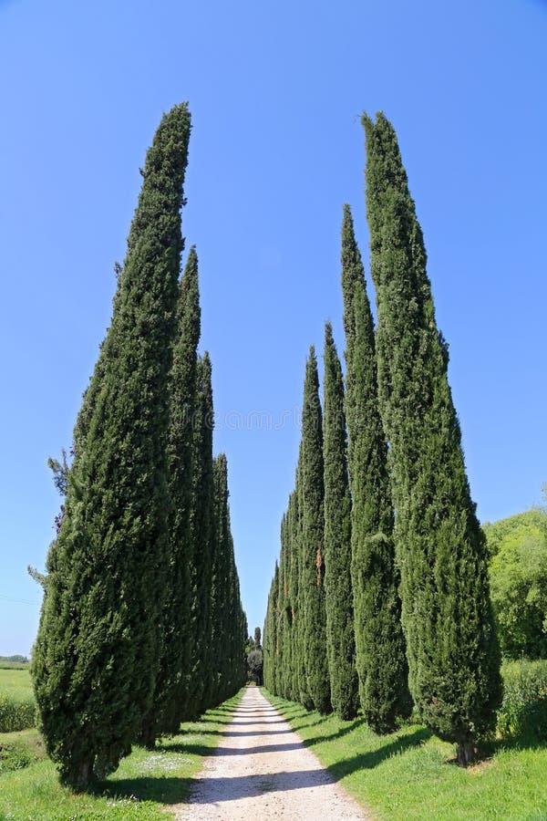 Cyprysowa aleja w Tuscany, Włochy zdjęcia royalty free