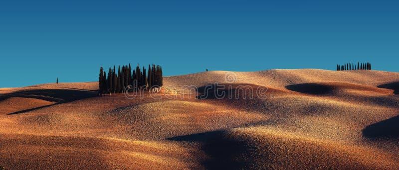 Cyprysowi drzewa na polu w Tuscany, Włochy przy zmierzchem zdjęcie stock