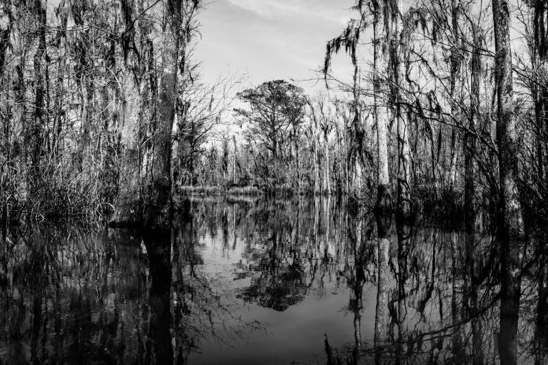 Cyprysowi drzewni bagażniki i ich wodni odbicia w bagnach blisko Nowy Orlean, w Luizjana zalewisku fotografia stock