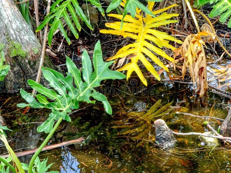 Cyprysowi fiszorki i drzewka palmowe zdjęcie royalty free