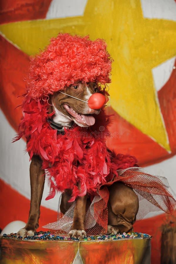 Cyrka pies zdjęcie royalty free