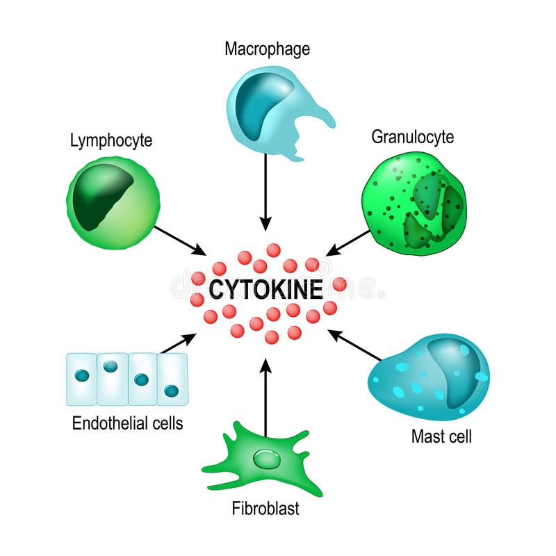 Cytokine Concepto del vector libre illustration