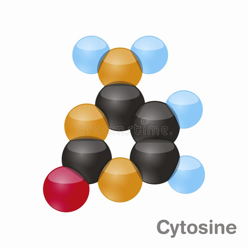 Cytosin, C Pyrimidin nucleobase Molekül Basis vorhanden in DNA Illustration des Vektors 3d auf weißem Hintergrund vektor abbildung