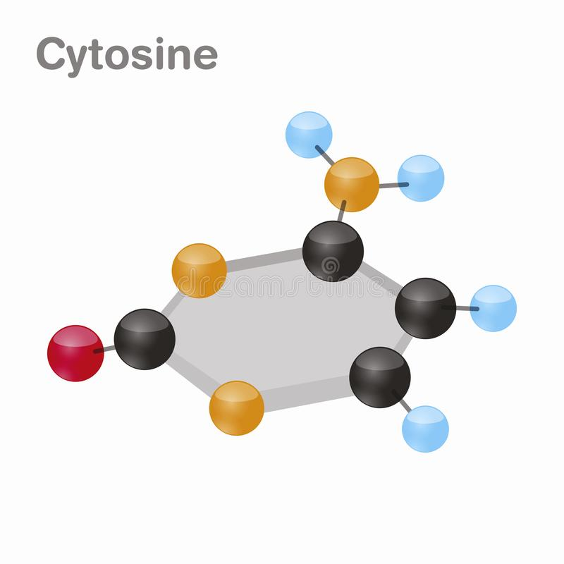 Cytosine HexNut, C Pyrimidinenucleobasemolekyl Gåva i DNA illustration för vektor 3d på vit bakgrund stock illustrationer