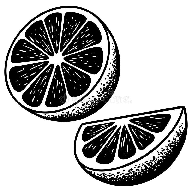 Download Cytrusów plasterki ilustracja wektor. Ilustracja złożonej z warzywa - 53789440