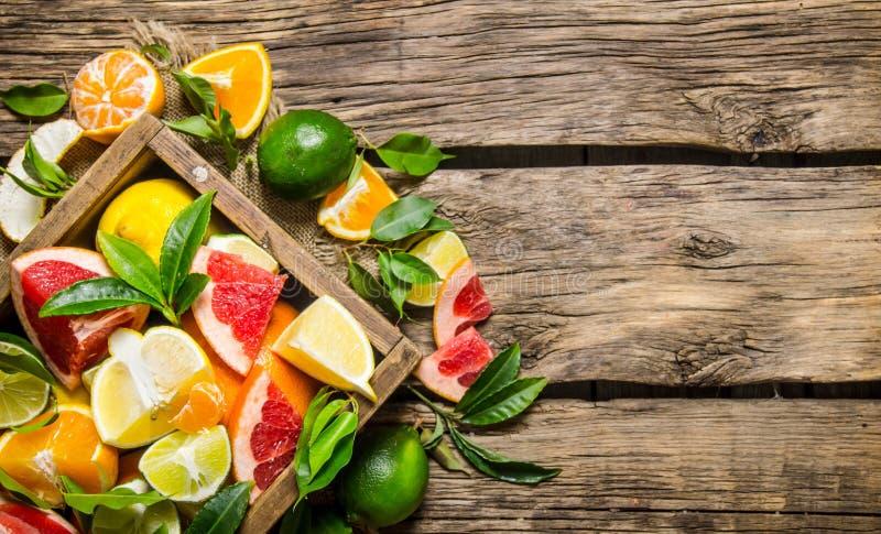 Cytrus - grapefruitowy, pomarańczowy, tangerine, cytryna, wapno w starym pudełku obraz stock