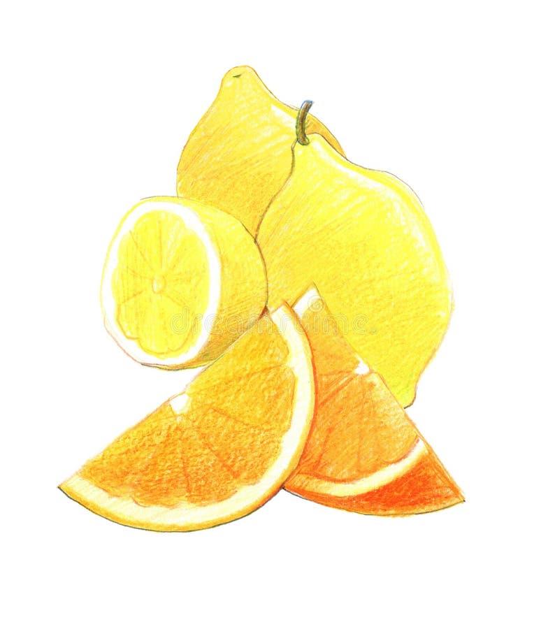 Cytrus owoc: cytryna i pomarańcze w całym i w cięciu Graficzny rysunek z barwionymi o??wkami pojedynczy bia?e t?o royalty ilustracja