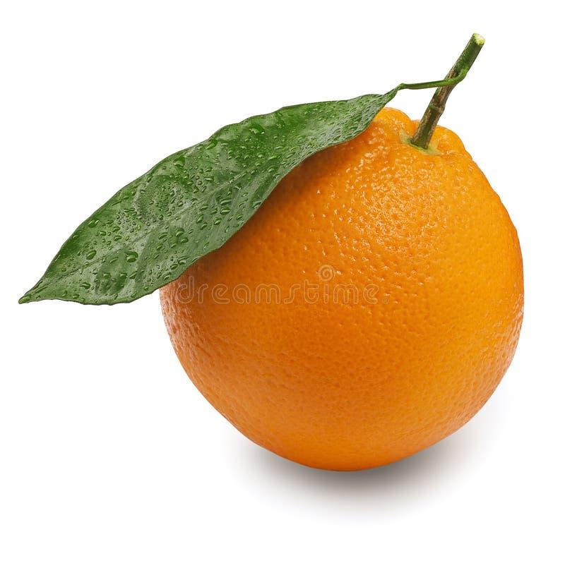 Cytrus owoc pomarańcze z liściem odizolowywającym na bielu fotografia stock