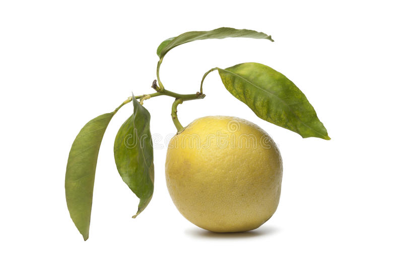 cytrusa owoc medica zdjęcia stock