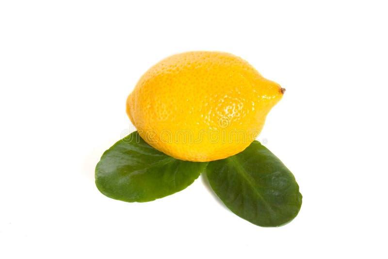 cytryna zdjęcie stock