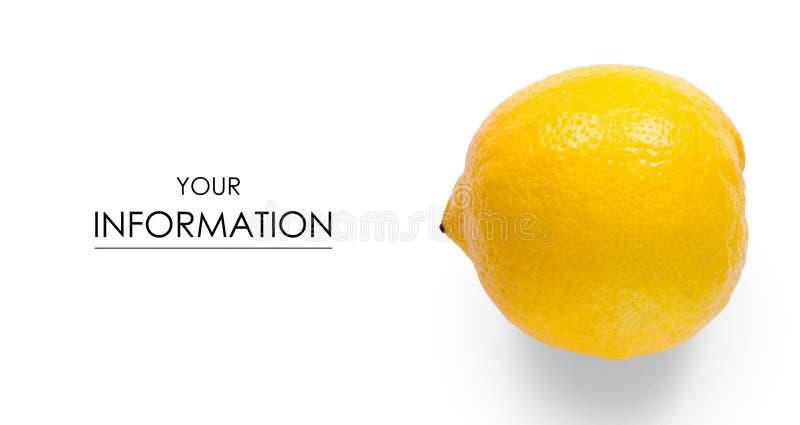 Cytryna cytrusa owocowy wzór zdjęcie royalty free