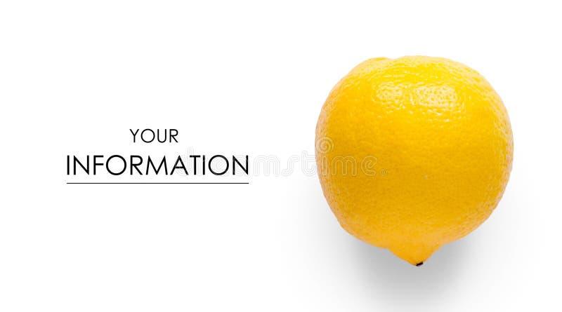 Cytryna cytrusa owocowy wzór obraz royalty free