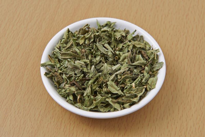 Cytryna Verbena Suszący liście obraz stock