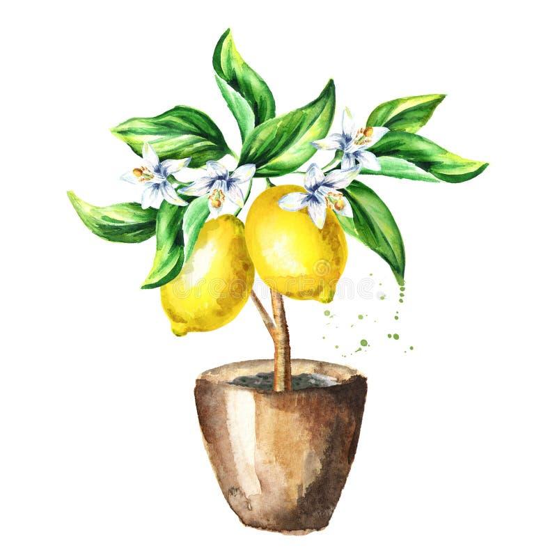 Cytryny drzewo z owoc, kwiatami i liśćmi, Akwareli ręka rysująca ilustracja royalty ilustracja