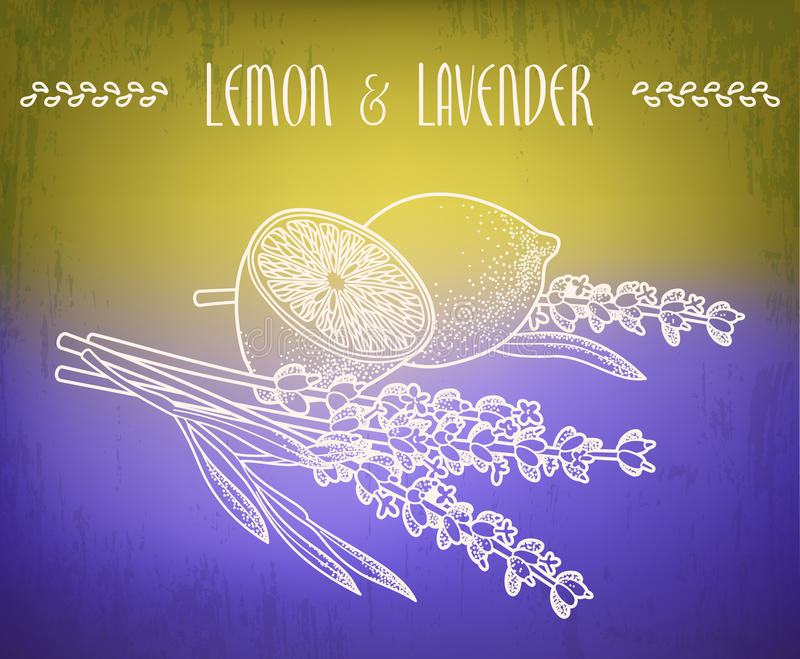 Cytryny i lawendy kwiaty ilustracji