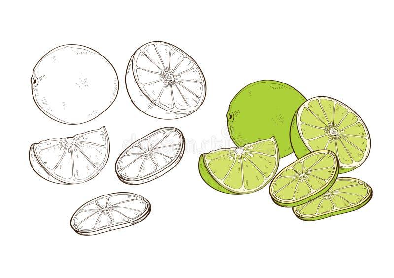 Cytryny Jarzynowy acidulous tarta zjadliwy smak ilustracja wektor