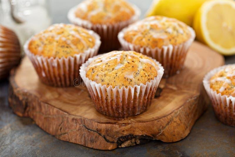 Cytryny Makowego ziarna Muffins zdjęcia stock