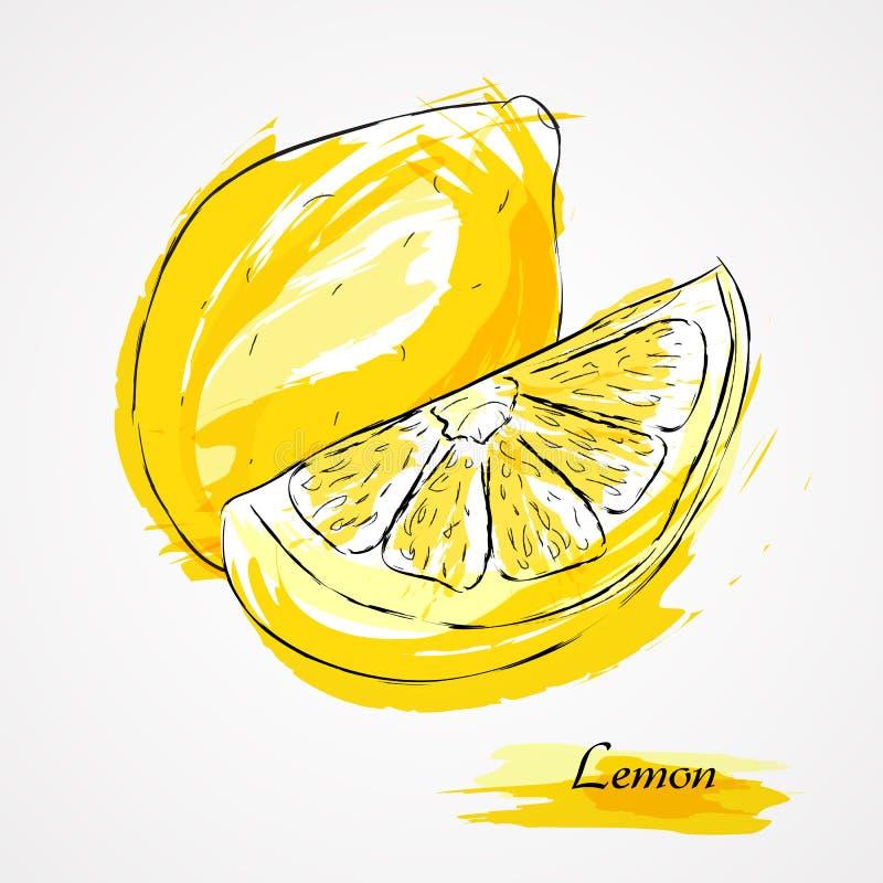 Cytryny owoc ilustracja wektor
