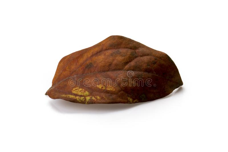 Cytryny owoc suszył liść odizolowywającego na białym tle fotografia royalty free