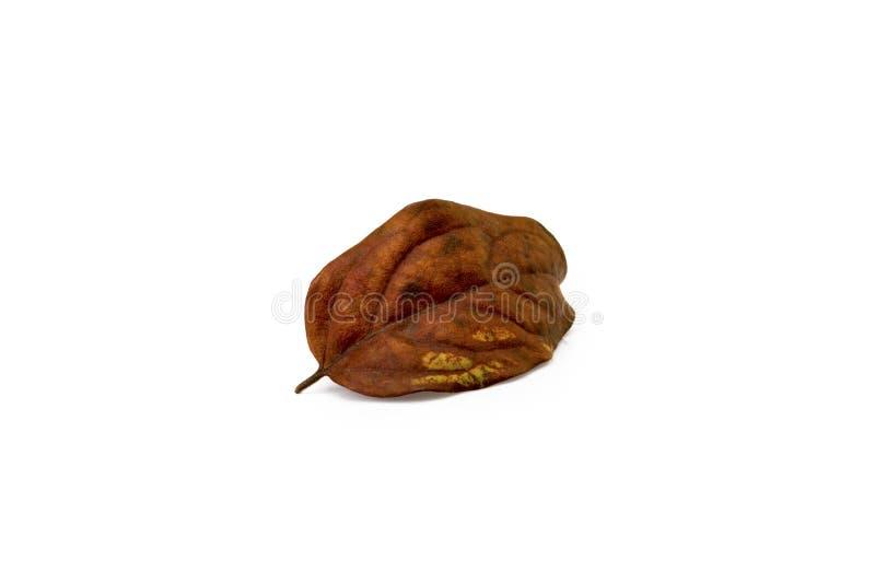 Cytryny owoc wysuszony liść na białym tle zdjęcia royalty free
