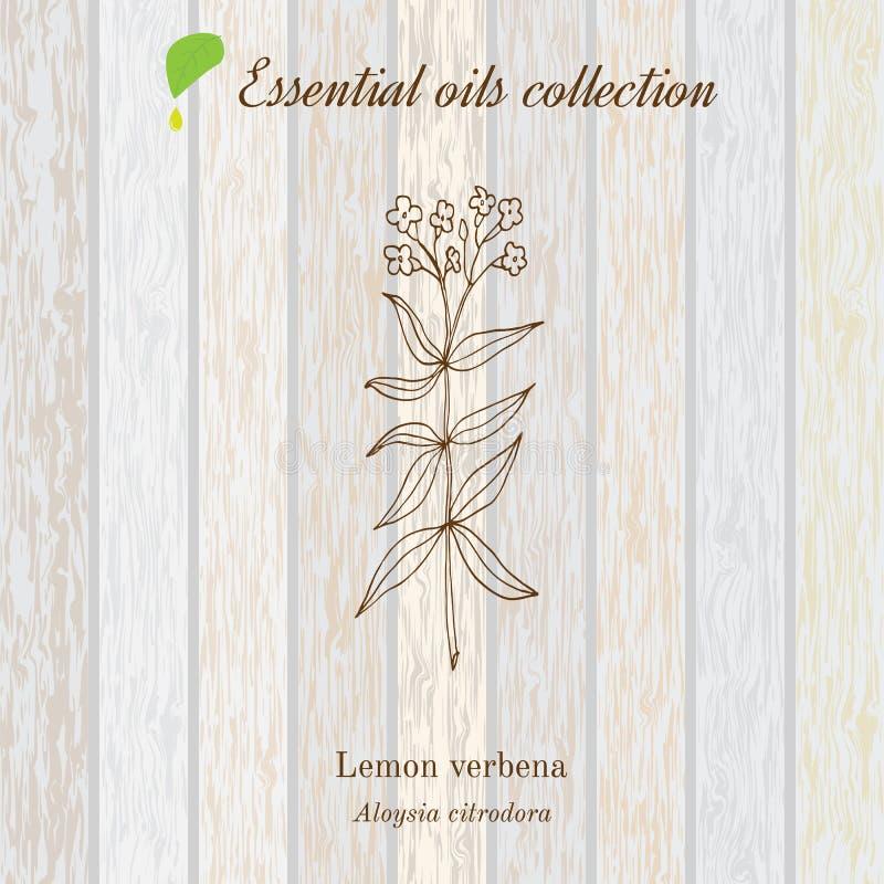 Cytryny verbena, istotnego oleju etykietka, aromatyczna roślina ilustracji