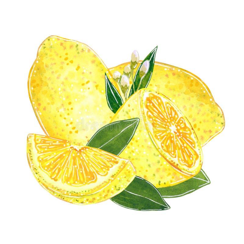 Cytryny z rżniętymi plasterkami z liśćmi ilustracyjnymi dla dżemu i, sok, lato menu Ręka rysująca akwareli ilustracja ilustracja wektor