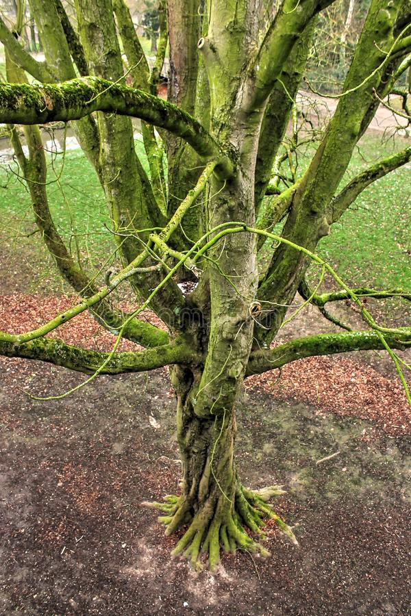 Część życie, drzewa zdjęcia royalty free