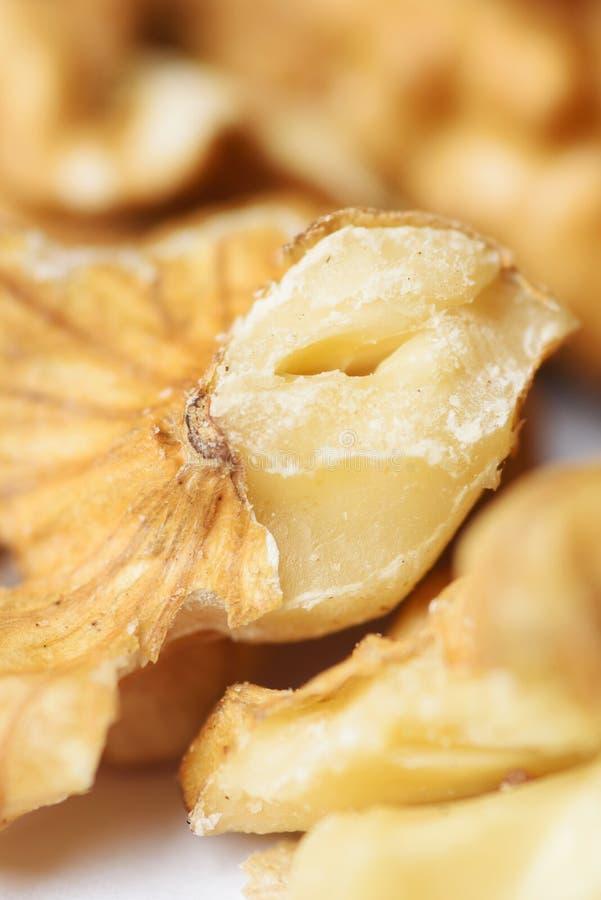 Część Nutmeat zdjęcie stock