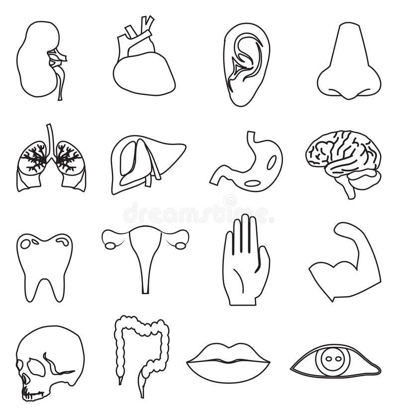 Części ciała ikony ustawiać ilustracja wektor
