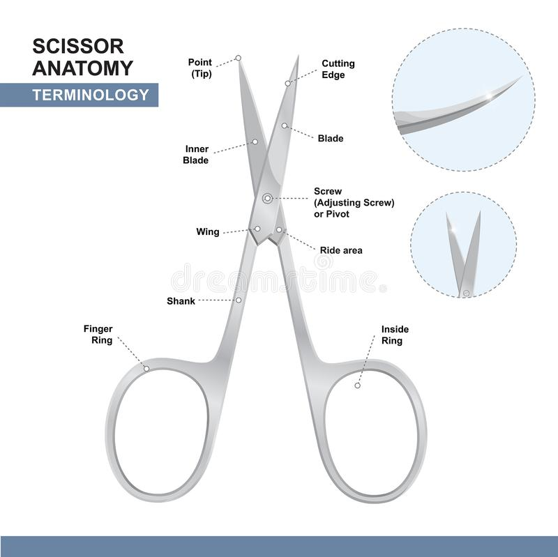 Części gwoździ Tnący strzyżenia Terminologia nożyce Manicure'u i pedicure'u opieki narzędzia wektor ilustracja wektor