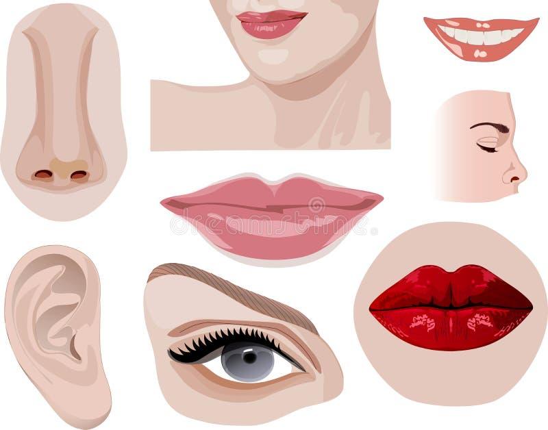 Części twarz odizolowywająca ilustracji