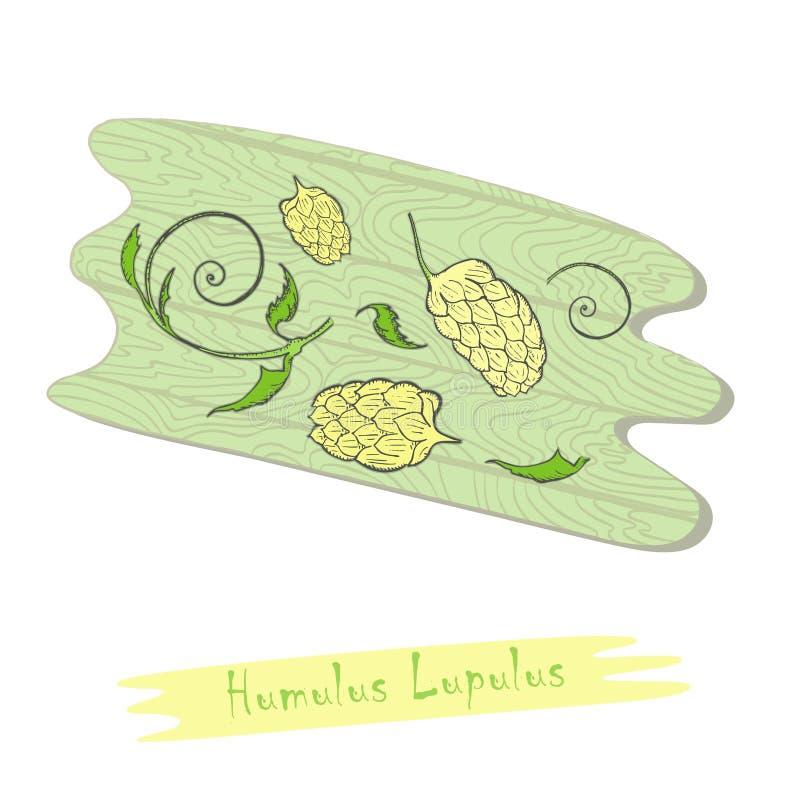 Części Ziołowy roślina chmiel na Tnącej desce ilustracji