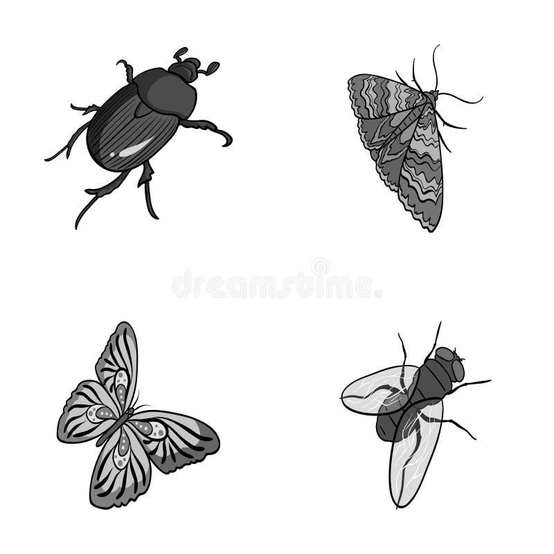Członkonoga insekt ilustracji