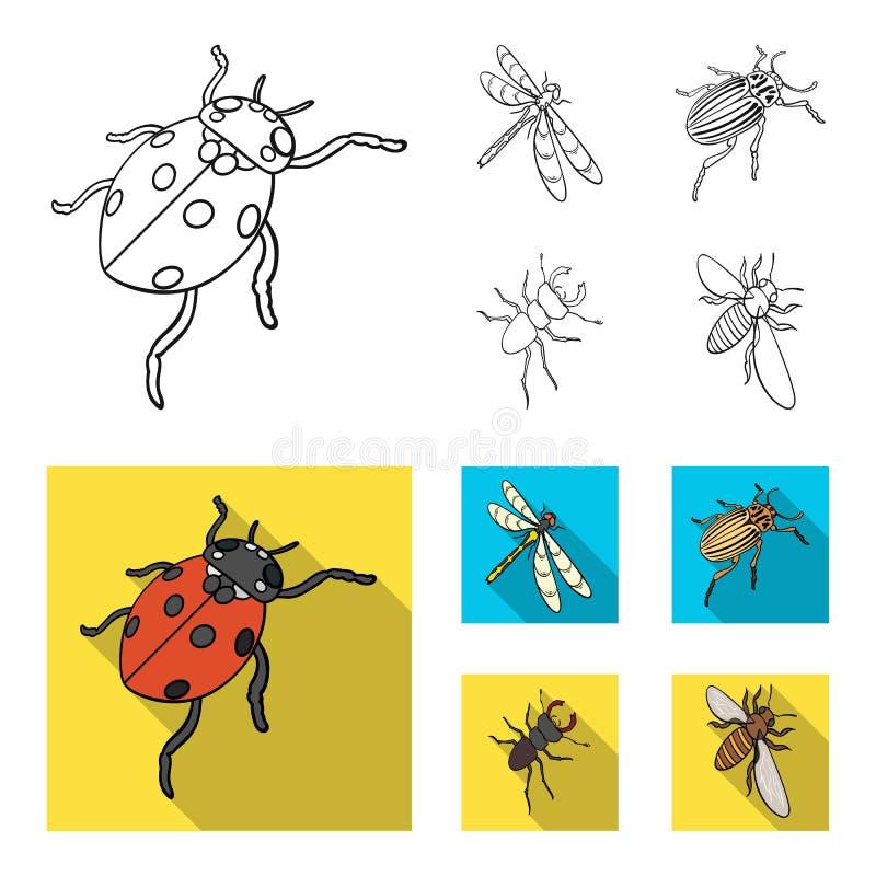 Członkonoga insekta ladybird, dragonfly, ściga, Kolorado ścigi insekt ustawiać inkasowe ikony w konturze, mieszkanie stylowy wekt ilustracji